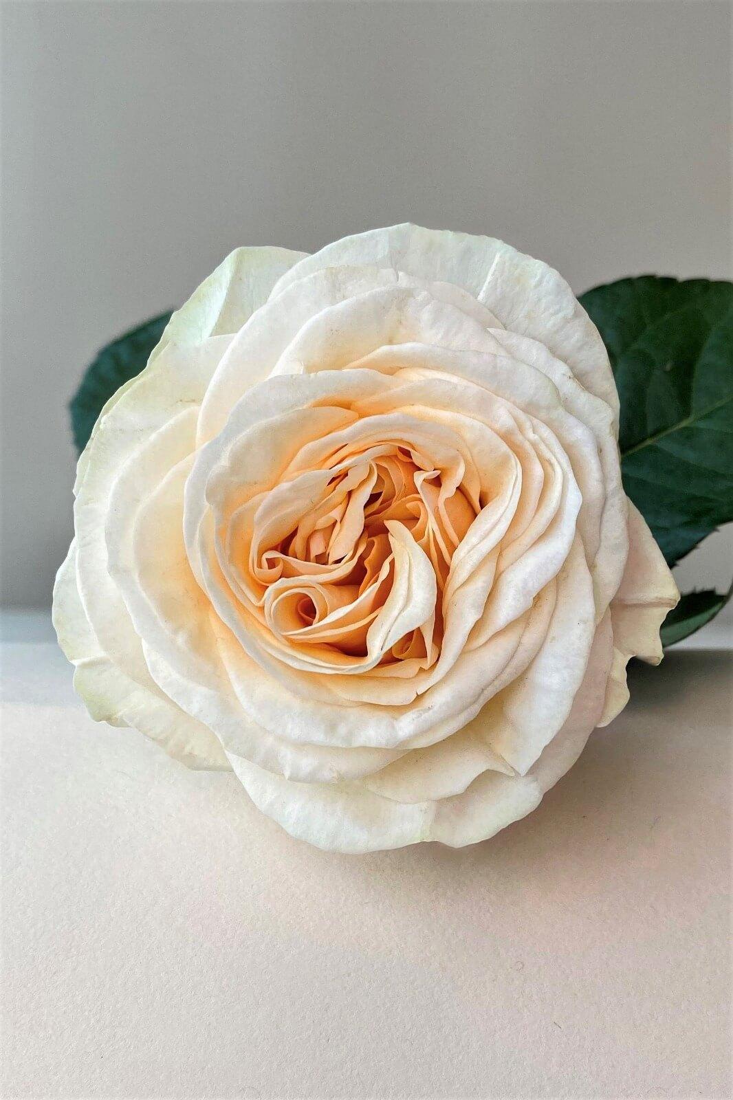 Rose Elaine